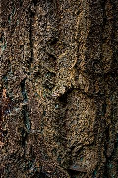 The beauty of the fir tree van Arc One