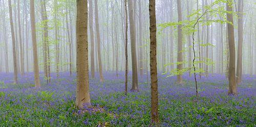 Bluebell bos van Sjoerd van der Wal
