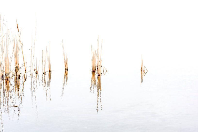Ruhige Aufnahme von Schilf in den Seen von Ankeveen von Rob IJsselstein