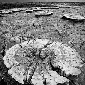 Formation de sel dans le désert d'Ethiopie sur Photolovers reisfotografie