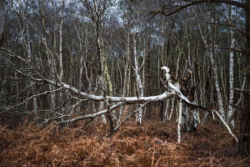 Gebroken boom van Meint Brookman