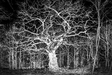 Creapy Oak