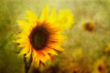zonnebloem van Claudia Moeckel