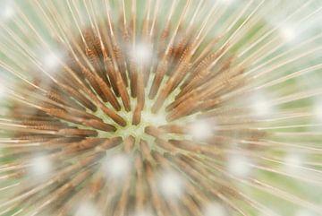 Paardenbloemzaden close-up von Margreet Frowijn