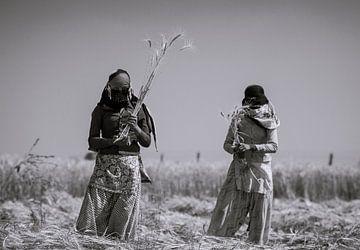 Female workers harvesting the land van