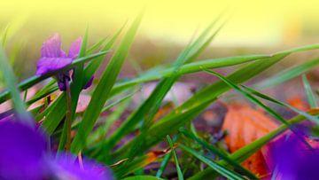 violet van M.A. Ziehr
