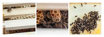 abeilles triptyque sur Anouschka Hendriks