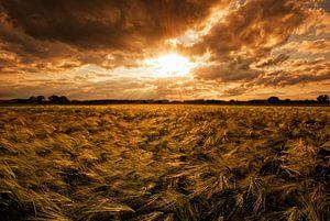 Feld im Sonnenuntergang van