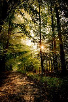 Gouden zonsopkomst van Arjen Uijttenboogaart