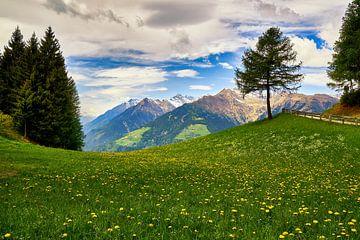 Am Meraner Höhenweg in Südtirol von Reiner Würz / RWFotoArt