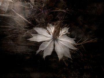 Nigella damascena delicate schoonheid van Claudia Gründler