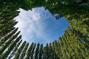 Prachtige bomencirkel tegen een blauwe zomerlucht