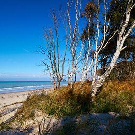 West-strand aan de Darß van Reiner Würz / RWFotoArt