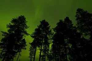 Bomen tegen lucht met Noorderlicht