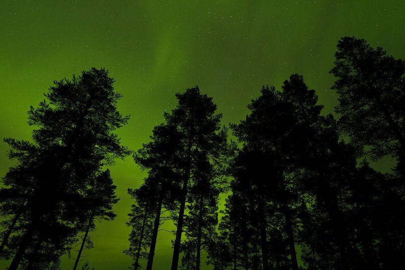 Trees in front of Northern Light sky in Finland sur Caroline Piek