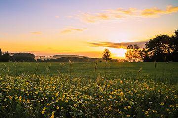 Sonnenaufgang mit Blumen von Maurice Welling