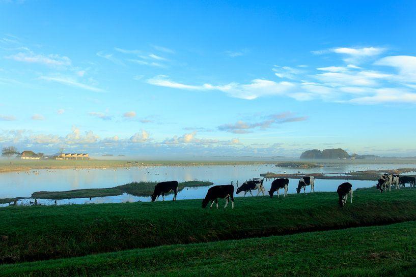 Cows on a misty morning van Marian Merkelbach