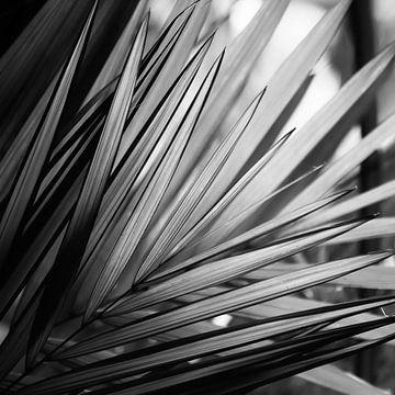 Palmblad zwart-wit von Insolitus Fotografie