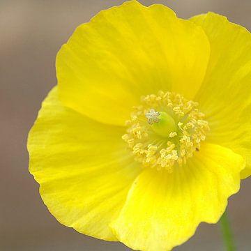 Yellow von Jodi van Dam