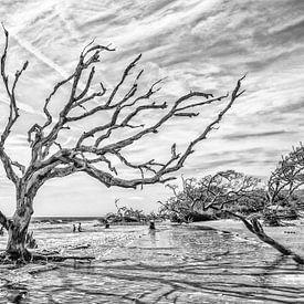 Verzilte bomen in het duingebied in Georgia VS. Wout Kok One2expose Photography von Wout Kok