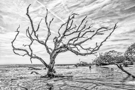 Verzilte bomen in het duingebied in Georgia VS. Wout Kok One2expose Photography