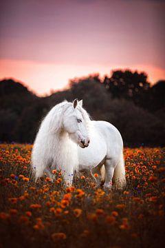 Tüftler auf dem Blumenfeld / Niederlande / Pferd / Tierfotografie / Beruhigendes Bild / von Jikke Patist