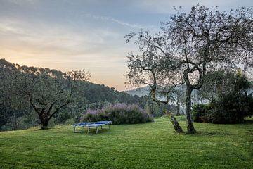Sonnenaufgang in der Toskana Italien auf Hügeln zwischen Olivenbäumen von Joost Adriaanse