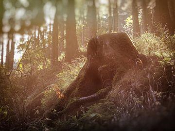 Wandern durch den schönen Wald van Dirk Bartschat