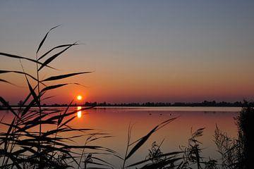 Sonnenuntergang in den Oostvaardersplassen von Fred van Bergeijk