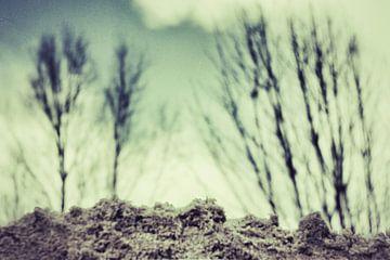 bomen op zandgrond van Nynke Venema | knynk