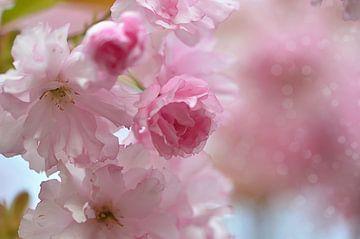 Frühlingszeit von zwergl 0611