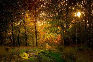 zie de zon schijnt door de bomen von Marc Goldman