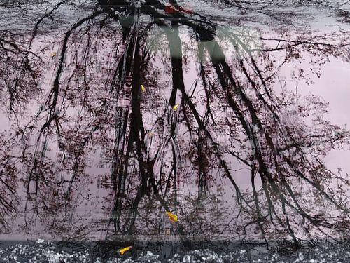 Urban Reflections 64