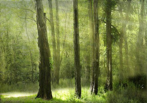 groen licht van