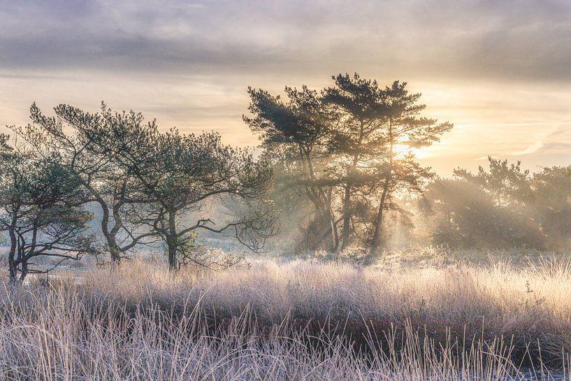 Frosty morning Beegderheide van Peschen Photography