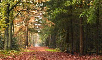 Herbstwald von Corinne Welp
