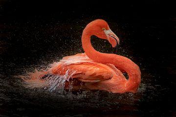 Rode Flamingo, vogelportret. van Gert Hilbink