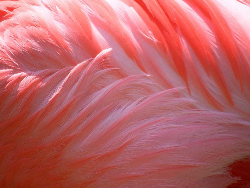 Flamingo van Fabian  van Bakel