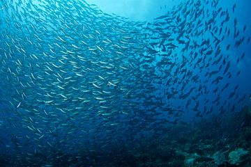 Draaiende kolk vissen van