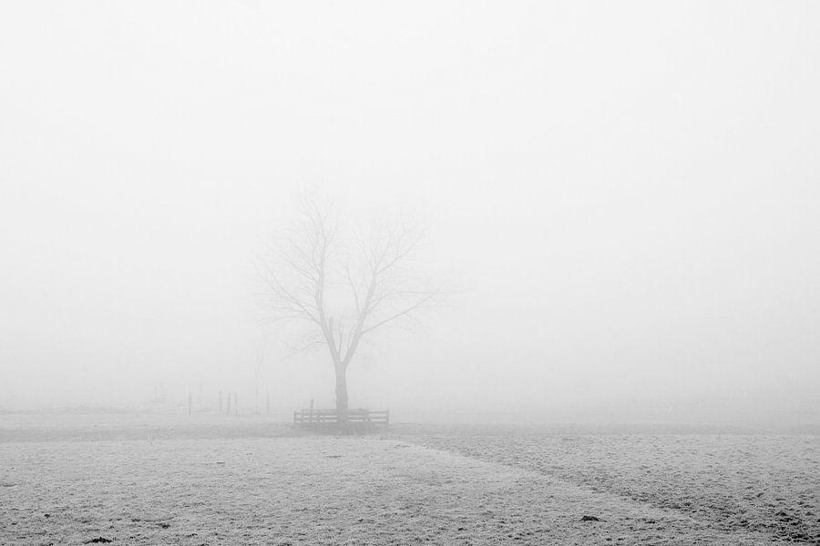kale boom in de mist