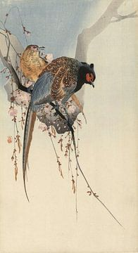 Fazantenkoppel en pruimenbloesem, Ohara Koson - ca. 1900