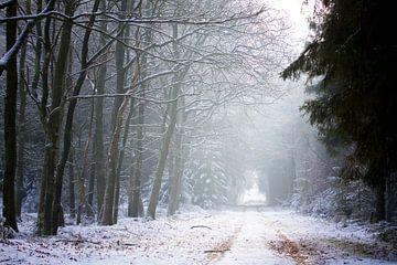 Besneeuwde bosweg in Drenthe van Karijn Seldam