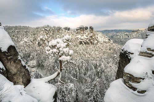 Bastei pine tree in Saxon Switzerland in winter #1 van Michael Valjak