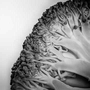 Groente serie - Broccoli van Wicher Bos