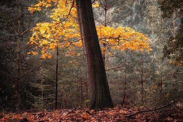 Herfst van Jeroen Linnenkamp