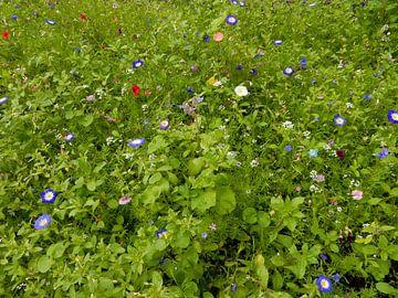 bloemen in het groen von Joke te Grotenhuis