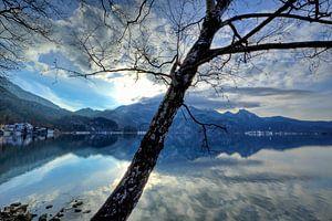Optische Täuschung - Baumspiegelung