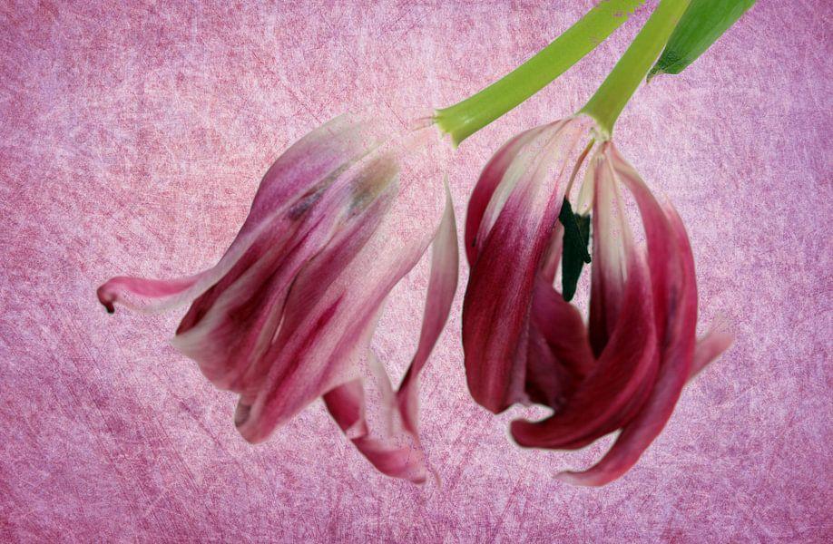 Tulpen kopfüber van Rosi Lorz