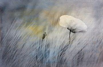 Mohnblume im Feld - Duo Tone von Annette Hanl