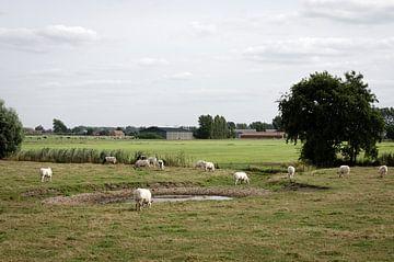 Meetjesland van Olivier Van Acker